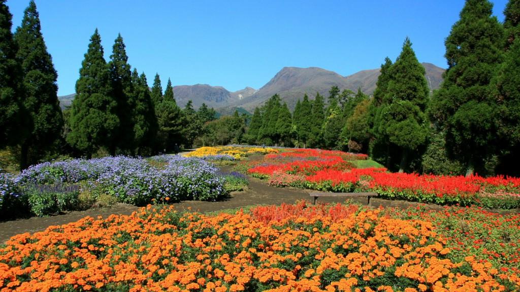 秋のくじゅう花公園