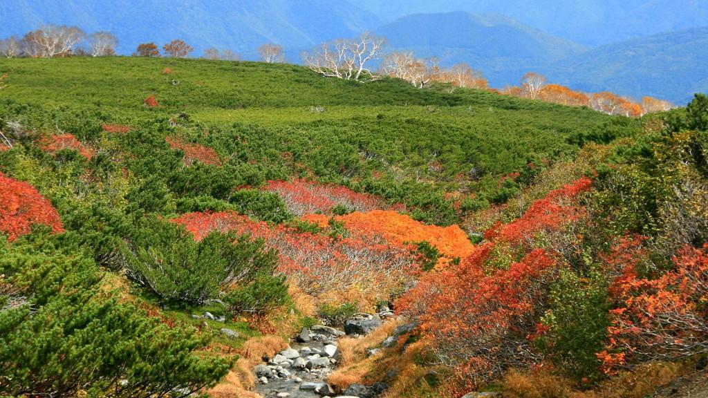 乗鞍岳の秋