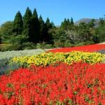 秋のくじゅう花公園(フルHD1920x1080ワイド壁紙)