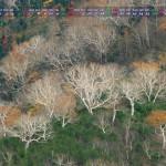 2013年10月カレンダー壁紙(妖精の舞)1920x1080ワイド壁紙