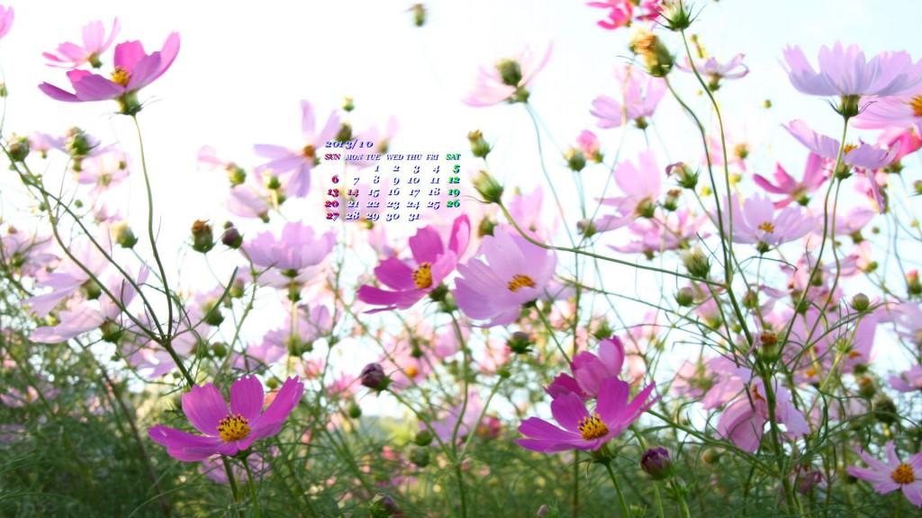 乱れ咲くコスモス
