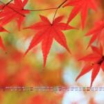 もみじ(2013年11月カレンダー壁紙・フルhd1920x1080ワイド)