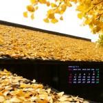 2013年11月カレンダー壁紙(屋根を黄色に染める下城の大イチョウ)