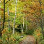 秋の遊歩道(フルhd1920x1080ワイド壁紙)
