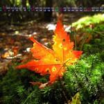 一隅の輝き(2013年11月カレンダー1920x1080ワイド壁紙)