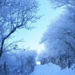霧氷のトンネル