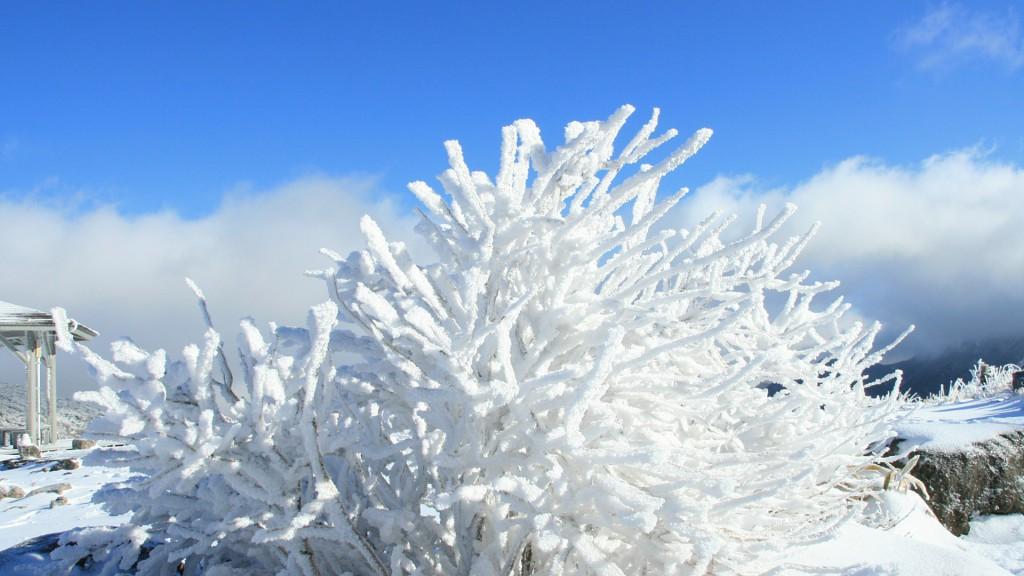 白いサンゴのような樹氷・霧氷