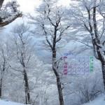 霧氷の林(1920×1080カレンダー壁紙・2014年1月)