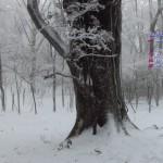白い森/2014年2月ワイドカレンダー壁紙(フルHD1920x1080)