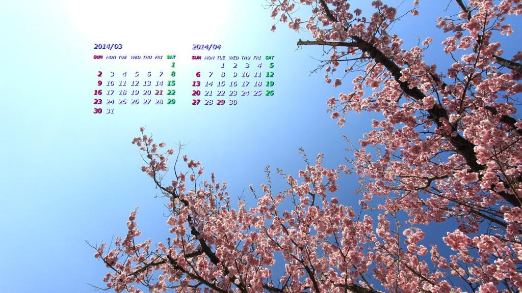 椿寒桜(2014年3月、4月カレンダー壁紙/フルHD1920x1080))