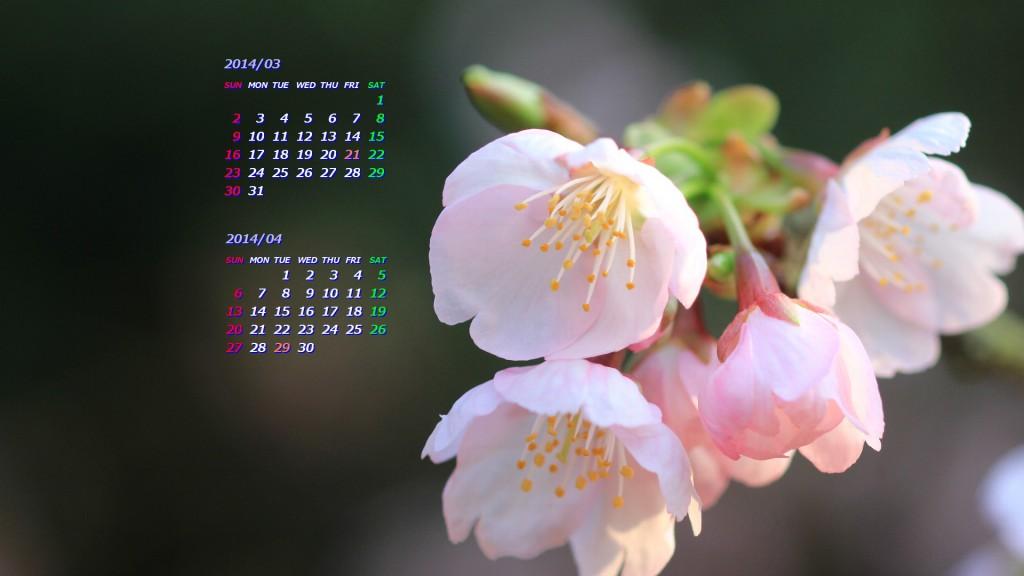 染井吉野より1週間程早く咲く薄紅色の美しい桜。寒緋桜(カンヒザクラ)と山桜(ヤマザクラ)または大島桜(オオシマザクラ)の雑種と考えられている。