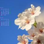 桜と青空(2014年4月5月カレンダー壁紙)