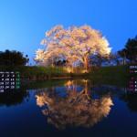 浅井の一本桜ライトアップ