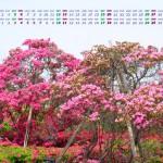 ツツジのカレンダー壁紙(2014年4月)
