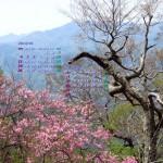アケボノツツジ(深山に咲く)