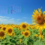 ひまわりと青空(2014年8月カレンダー)