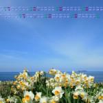 日本海とスイセン(鎌手水仙公園)