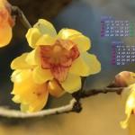 春を呼ぶロウバイの花