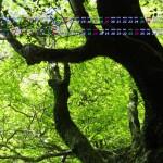 新緑若葉の季節