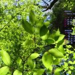 若葉輝く新緑の森