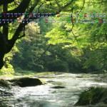 新緑の渓谷(菊池渓谷)