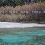 清流梓川とカラ松林