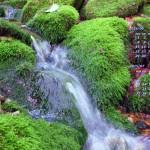 苔石と流れ