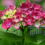 雨と紫陽花(2)