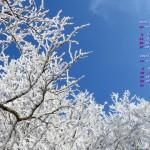 青空に輝く霧氷