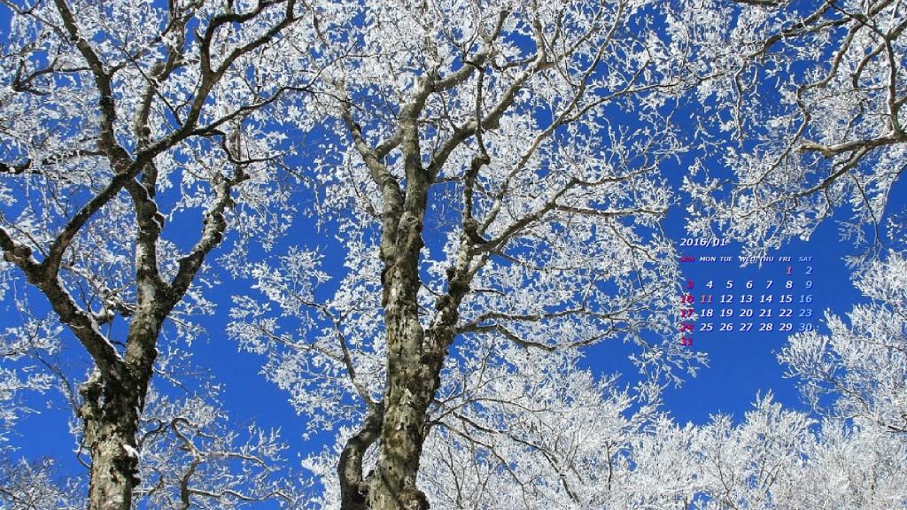 青空に輝く霧氷(英彦山)