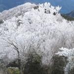 霧氷の綺麗な仰烏帽子山