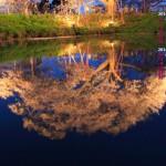 水に映る大桜