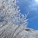 霧氷と青空