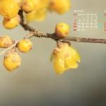蝋梅(2017年2月カレンダー)