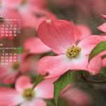 2017年4月カレンダー12