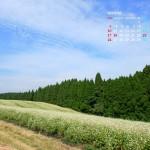 秋空と蕎麦畑(阿蘇波野)