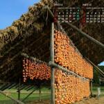 干し柿小屋