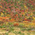 錦模様の安達太良山
